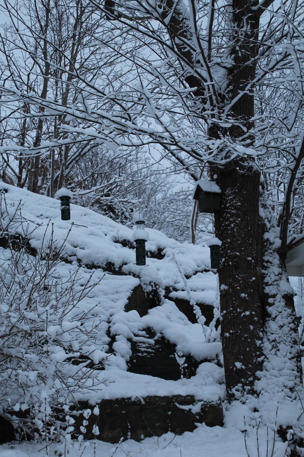 trädgård snö vinter