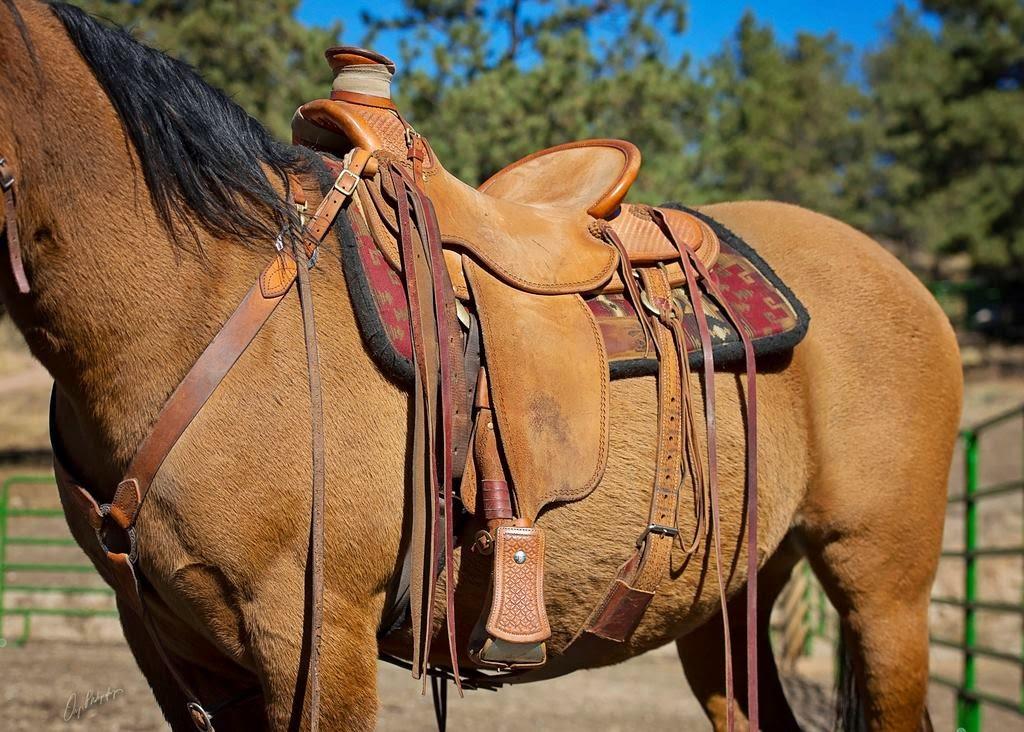 Buckaroo Leather Horse Tack, Use, Care and Maintenance: AAA
