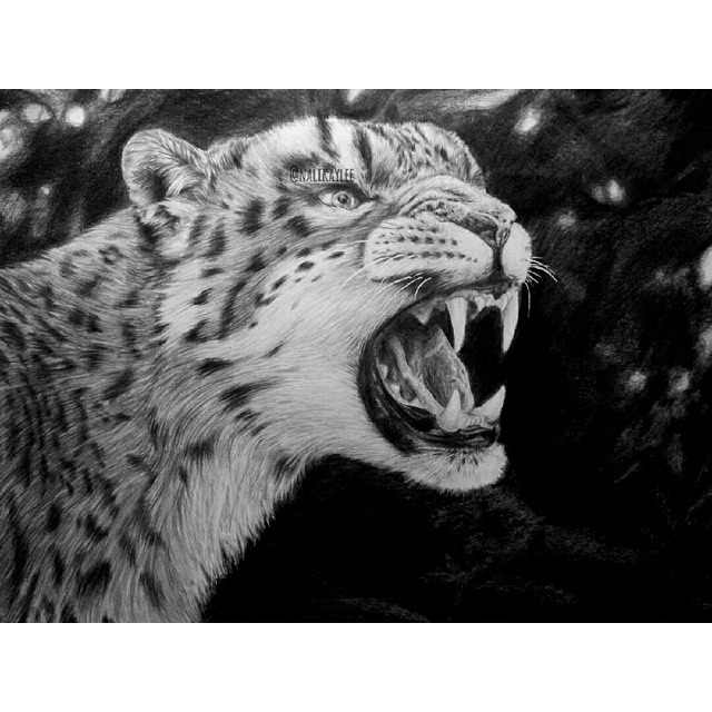 07-Snow-Leopard-Kaylee-Yang-nalikaylee-Realistic-Drawings-which-Include-Animals-and-Objects-www-designstack-co