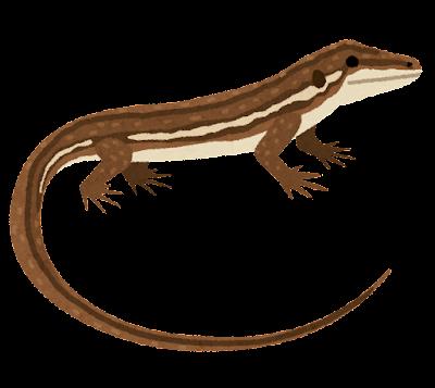 カナヘビのイラスト