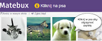 MateBux, matebux.com - obrazek z psem