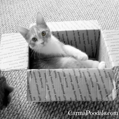 Kitten Davy in a box