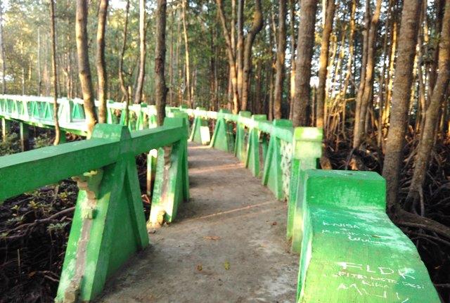 Hutan Mangrove di Kota Langsa Menjadi Kawasan Wisata Terlengkap di Dunia