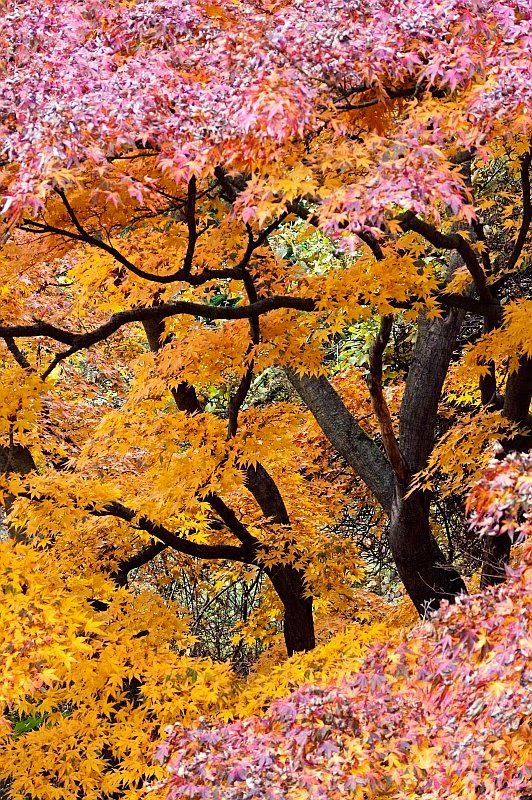 Beautiful Autumn Sunset: Beautiful Autumn Color