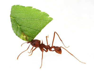 leaf cutter ant fungus relationship quotes