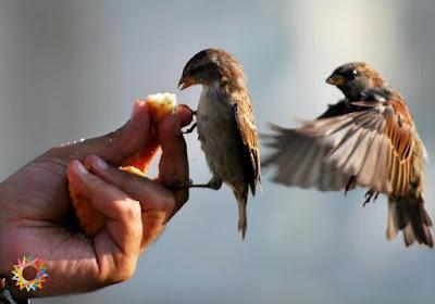 2 burung dapat makanan