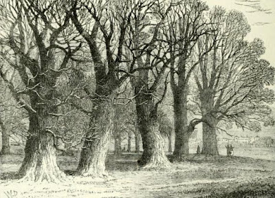 A group of old trees in Hyde Park  from Old and New London by E Walford (1878)