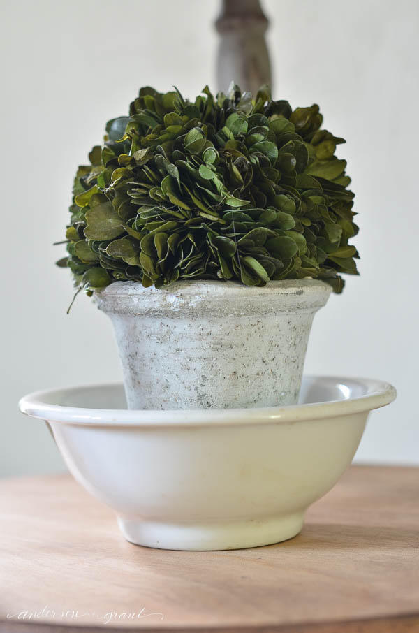 Unique decorating idea....display a boxwood topiary inside a white ironstone bowl.  |  www.andersonandgrant.com
