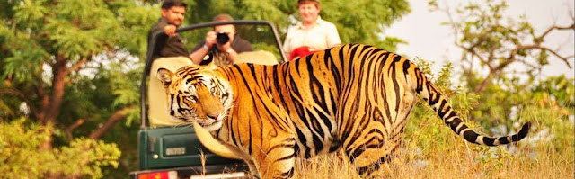 Corbett Hotels, Corbett Resorts, Corbett Sightseeing, Corbett Car Booking, Corbett Tour Package, Corbett Travel Agent, Corbett Tour Operator Ahmedabad, Corbett Couple Tour, Uttrakhand Tour Packages, Corbett Jungle Resorts, Corbett Park Sightseeing
