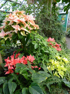 2018 Allan Gardens Conservatory Winter Flower Show poinsettias and tropical plants by garden muses--not another Toronto gardening blog