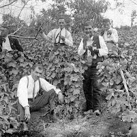 Old Bulgarian vineyard