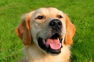 Chronic Renal Kidney Failure In Dogs Pet Lover