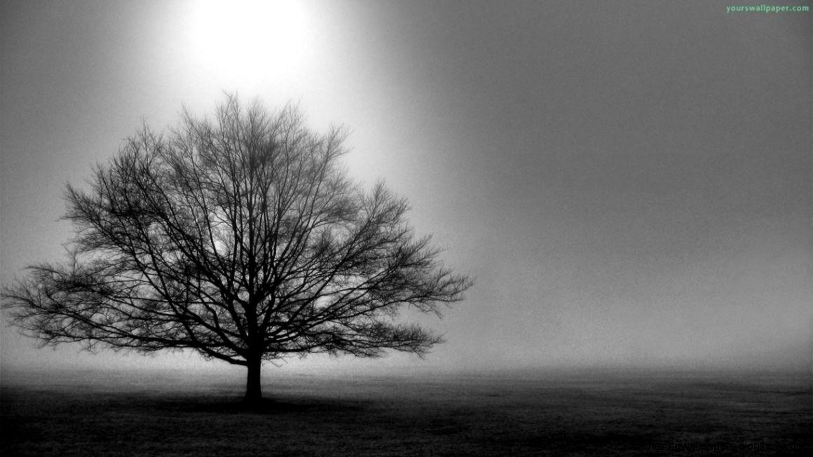 Black And White Tree Desktop Wallpaper