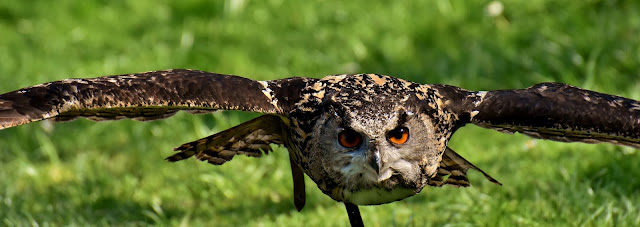 Owl-Facts