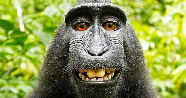 Image d 39 animaux photo d 39 un singe en gros plan - Petit singe rigolo ...