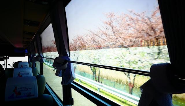 Fahrt nach Incheon mit Kirschblüte