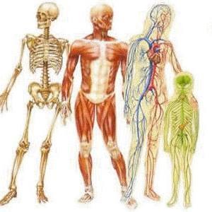 Tratamento de dores nas costas, coluna, ciático, lombares, torcicolo, ombro, pescoço com Massagem Terapêutica (Massoterapia), Quiropraxia e Reflexologia em São José SC (48) 3094-5746