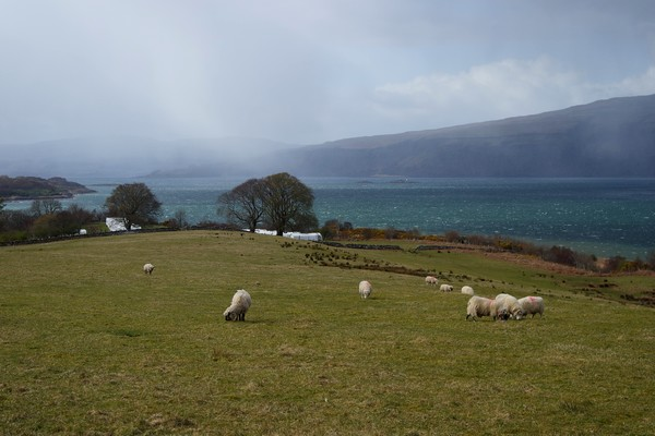 écosse highlands île mull craignure