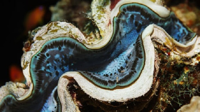 Oceans clams, worms release significant amount of potentially harmful greenhouse gas into atmosphere