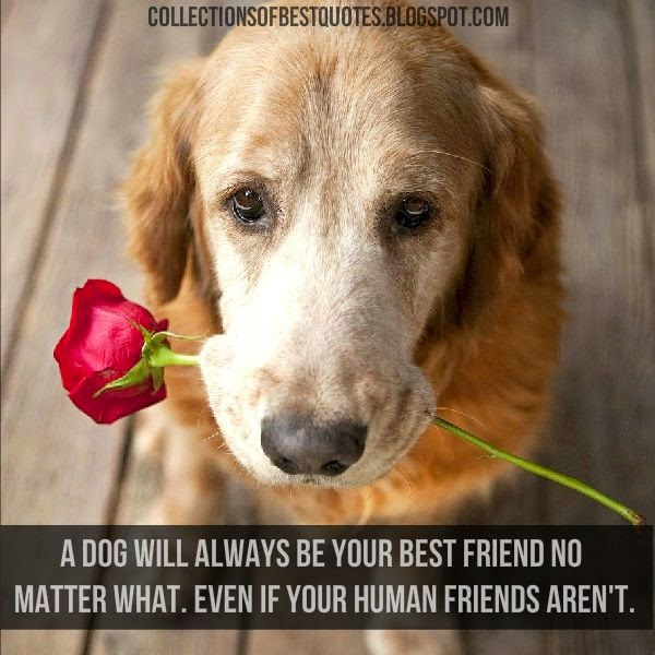 Dog Best Friend Quotes Collections Of Best Quotes: A dog will always be your best friend Dog Best Friend Quotes