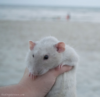 Oliver at Myrtle Beach