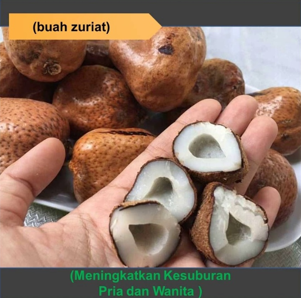 Agen Buah Zuriat Murah di River Valley Singapore