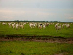ranch los llanos colombia