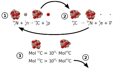 pembentukan dan peluruhan karbon 14