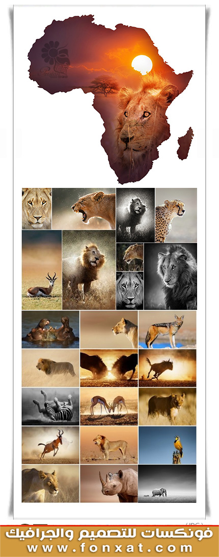 Download picture quality with amazing animals African