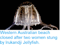 https://sciencythoughts.blogspot.com/2018/04/western-australian-beach-closed-after.html