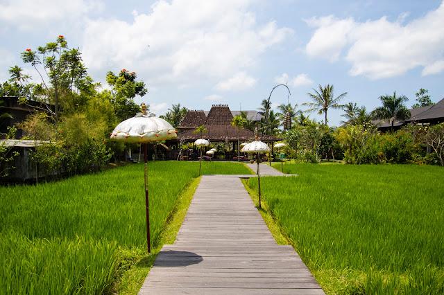 Alaya Ubud resort-Bali- Esterni-Risaie