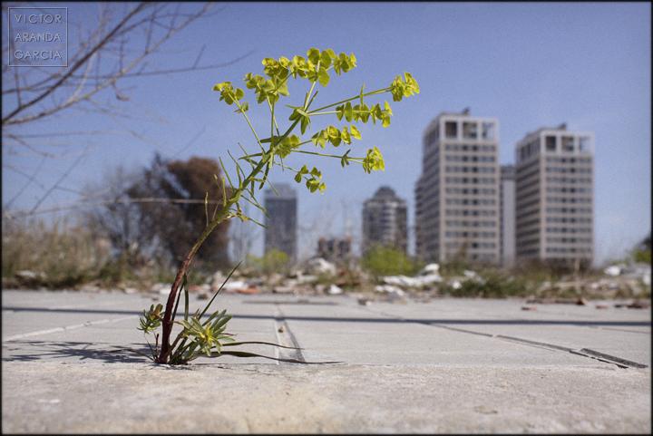 fotografía, naturaleza urbana, Valencia, serie