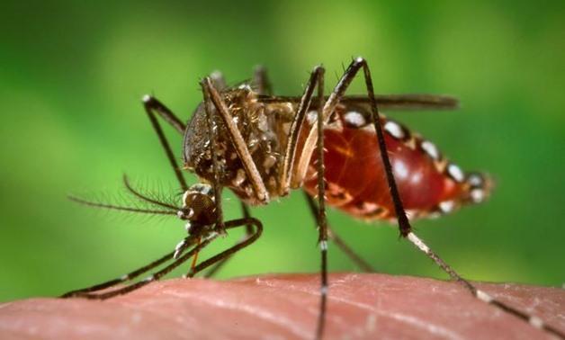 Perbedaan Antara Malaria dan Demam Berdarah