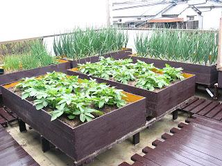 いくつか集まるとかなりの作物が本格的に作れる。
