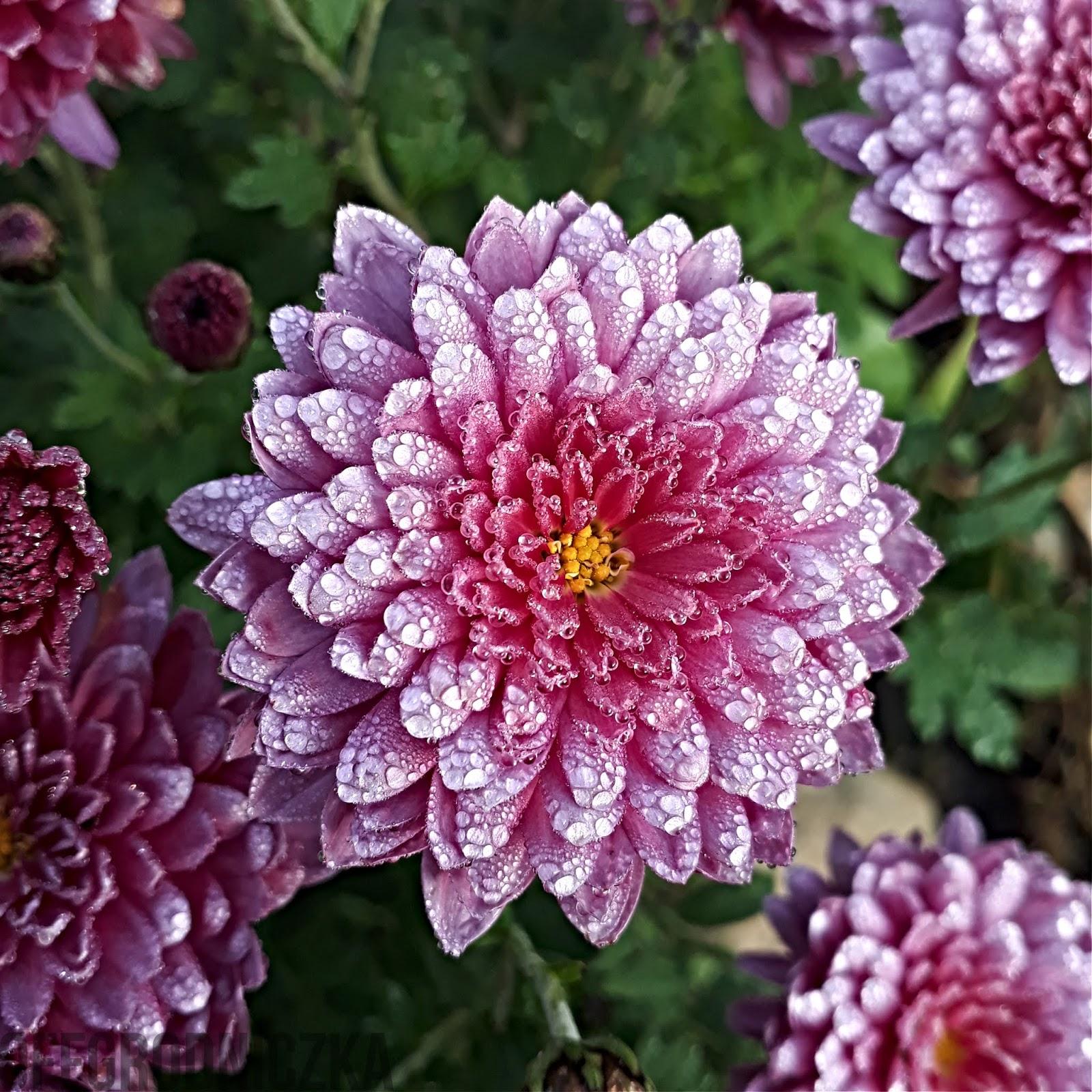 5 Kwiatow A Nawet Wiecej Ktore Mozesz Zjesc Jesienia
