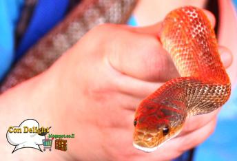 נחש snake