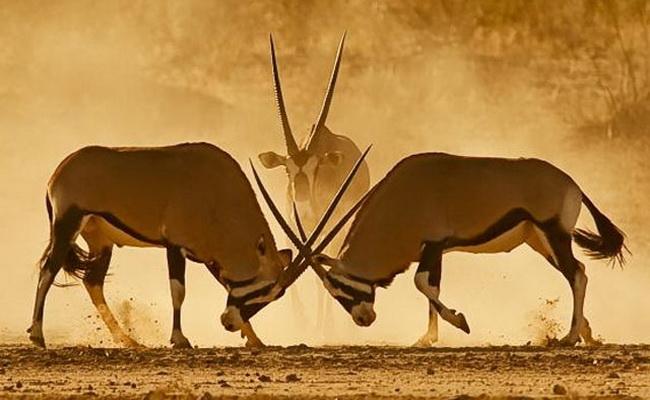 www.xvlor.com Kgalagadi Transfrontier Park