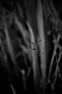 Black Spider Net Wallpaper Black Backgrounds For Mobile