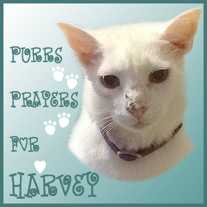 Purring for Harvey