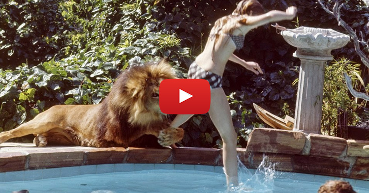This family is having a king of the jungle in their home, see how they managed to live with it