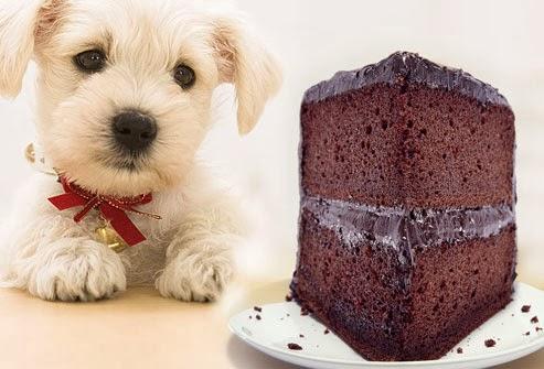 Anjing Makan Coklat
