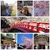 【日本 東京】 女子一人旅東京追櫻行程規畫 - 不會日語也要隨興玩