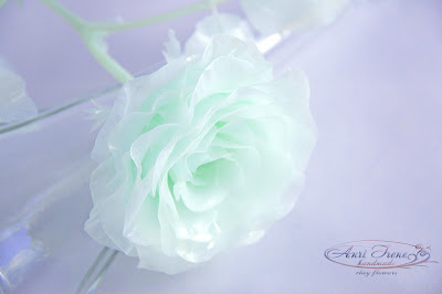 Monochrome green rose
