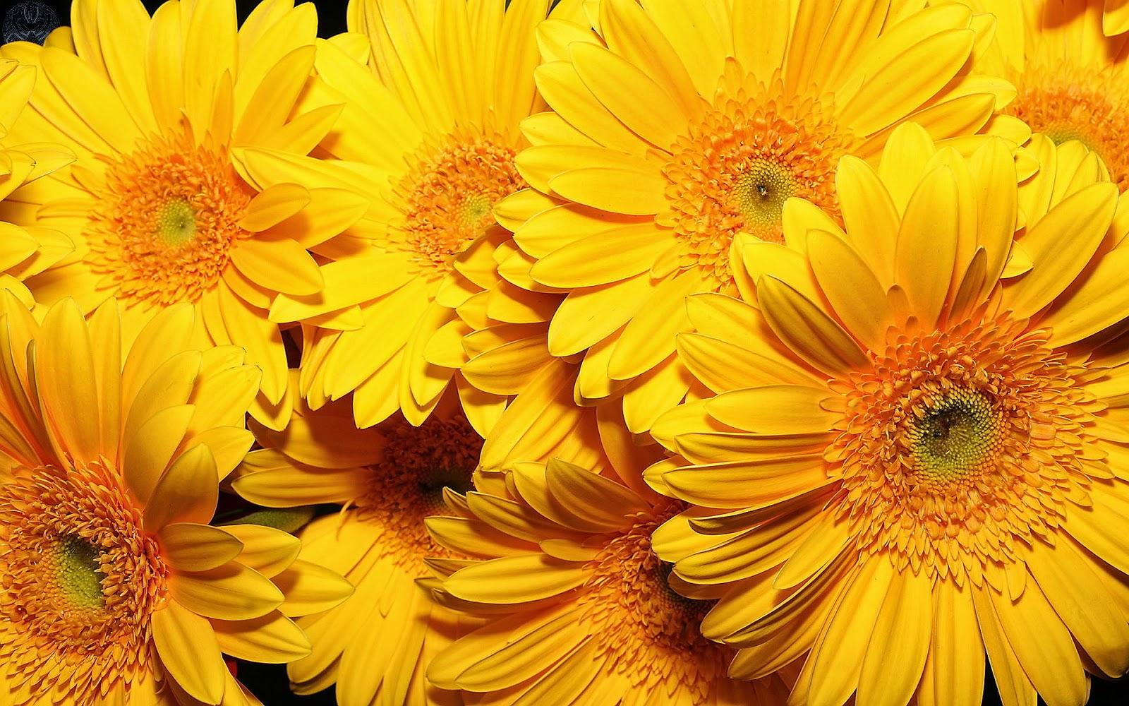 #10 Best Flowers HD Wallpapers