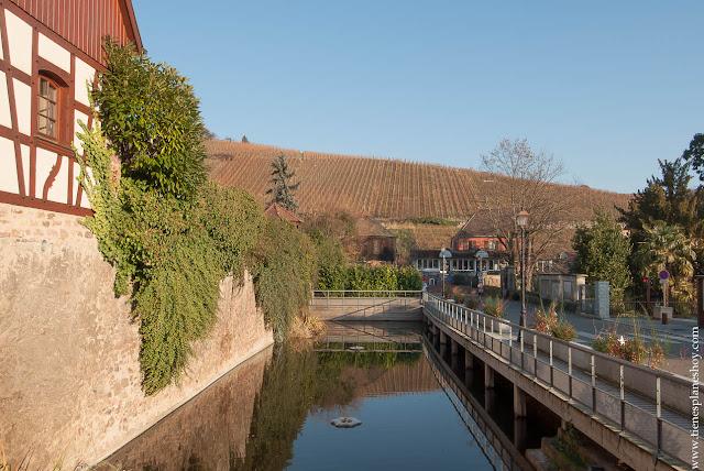 Riquewihr viñedos Alsacia viaje