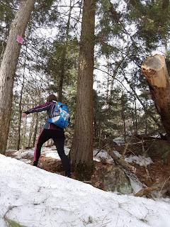 Randonneuse, sentier l'Escapade, mont Rigaud, neige, printemps, arbres
