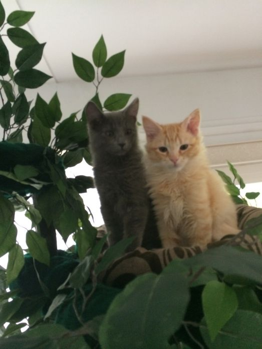 Sturdy Cat Trees for Big and Heavy Cats