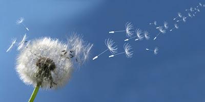 Allergie au printemps, petits gestes contre l'allergie au pollen