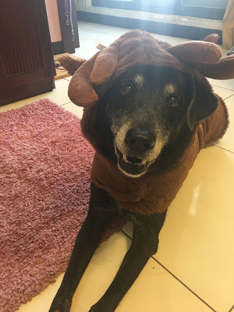 Shadow the dog looks happy in his costume