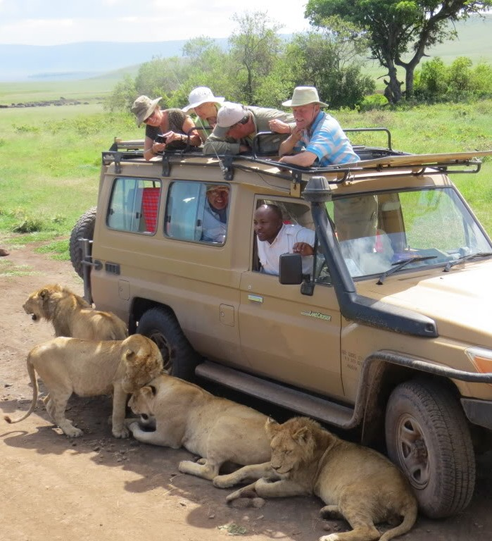 Picture of a pride of lions near our land Rover car.